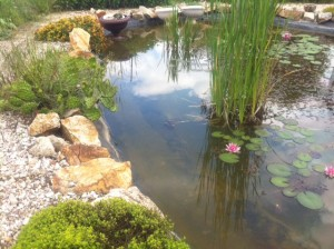 Fish pond in the garden
