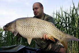 Huge carp fishing